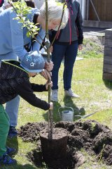 Gartenprojekt Baum einpflanzen